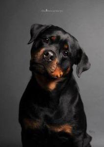 Larry's dog4