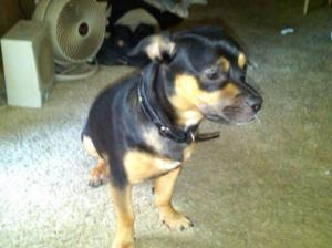 Larry's dog5
